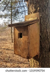 Little birdhouse on the tree in the woods