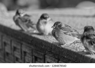 Little birds lined on the sunlight