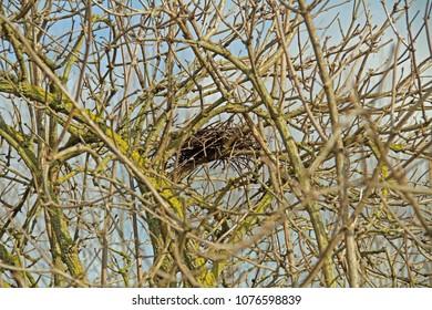 a little bird's nest