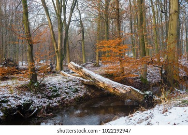 A little bit of snow and a fallen tree trunk about ditch in Planken Wambuis, Ede