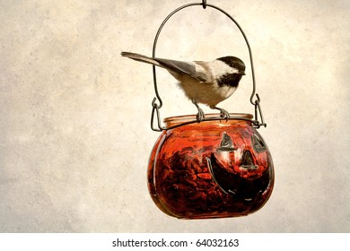 A little black capped chickadee perched upon a glass pumpkin filled with seeds.