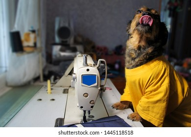 Dog Jobs Stock Photos Images Photography Shutterstock