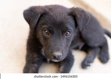 little black puppy without breed in the street alone