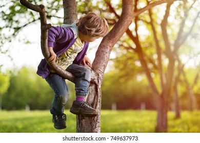 Little blonde hair boy in orchard climbing tree. Sunshine in background. Shallow depth of field.