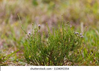 Little blue and purple flowers growing wild in the field