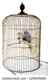 little blue wavy parrots in cage on white background isolated