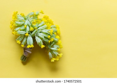 Little bouquet of yellow primula flowers with packthread on yellow background. Photo with copy blank space.
