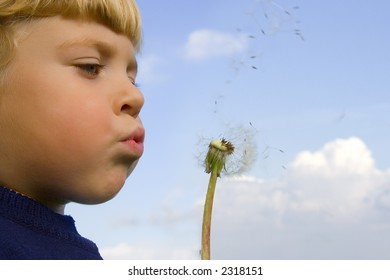 Little boy blows on a seedy pod plant as seeds drift off