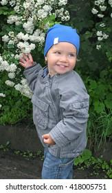 A little boy in a blue cap on a background of white flowering bush exochorda. Season spring.