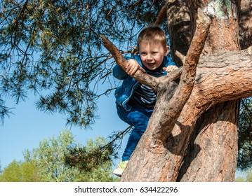 The little boy climbs a tree.