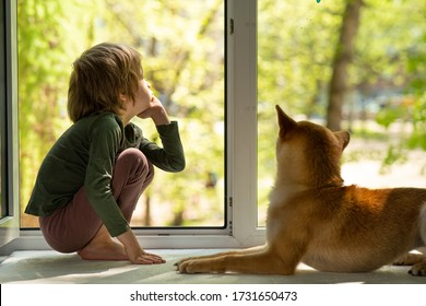 little boy with dog looking through window at summer garden. Summer dreams and isolation during quarantine concept
