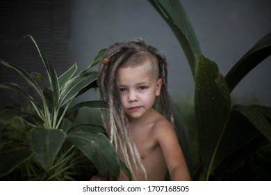 Little boy with a dreadlocks hairstyle. Fancy Hairstyle.