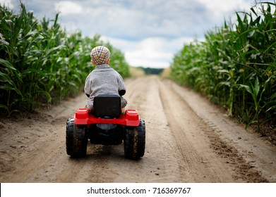 A little boy farmer is  driving a small tractor on a dirt road through a cornfield