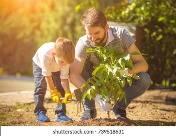 The little boy and a father plant a tree