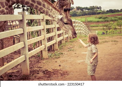Little boy feeding a giraffe at the zoo at the day time.