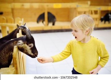 Little boy feeding goat. Child at indoor petting zoo. Kid having fun in farm with animals