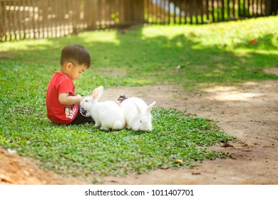 Little boy feeding his rabbit.