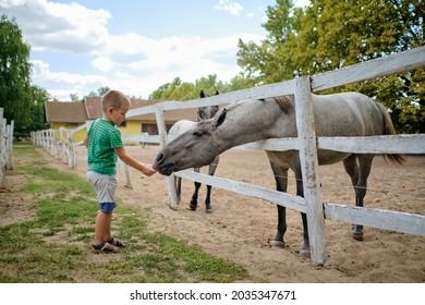 Ein kleiner Junge ernährt ein Pferd auf dem Bauernhof an einem schönen Sommertag.