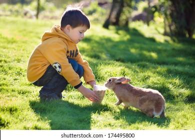 Little boy feeding rabbit in farm