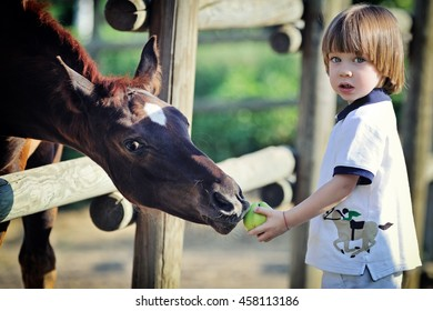 Little boy feeds horses with apple
