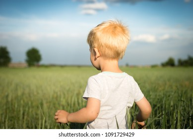 A little boy in a field of growing grain - view from the behind of the child's back