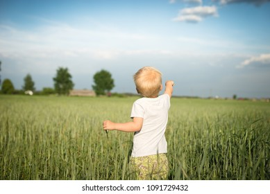 A little boy in a field of growing grain, he shows something  - view from the behind of the child's back
