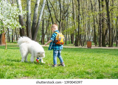 A little boy with glasses plays a ball with a white dog. A samoyed dog and a little hipster play football in the park on the grass in spring. A samoyed dog holds the ball in his teeth