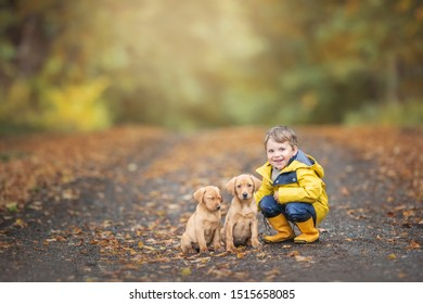 Little boy is having a rest crouching on the road in the woodland with two beautiful Labrador puppies wearing a yellow raincoat and yellow gumboots dressed for the early autumn colors