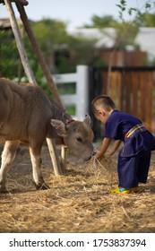 Little boy and his buffalo