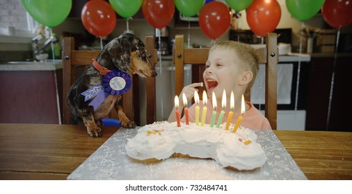 Little boy and his dog celebrating a birthday