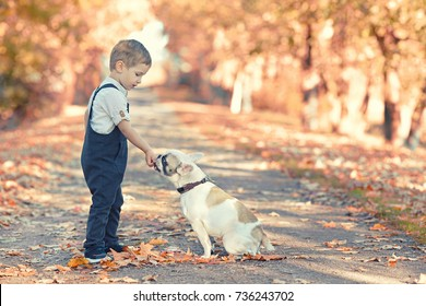 Little Boy with his dog (French bulldog) in autumn park