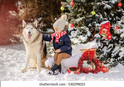 little boy and his dog  in a snowy park.A little boy sits on a sleigh in a winter park and plays with his dog the husky