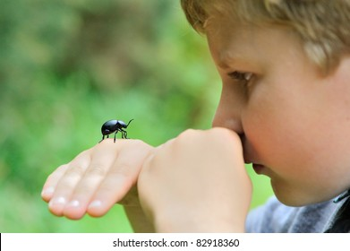 Little boy holding a bloody-nosed beetle (Timarcha tenebricosa)