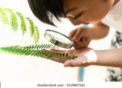 Little boy holding Magnifying glass for learning with nature