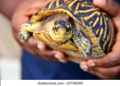 little boy holding turtle