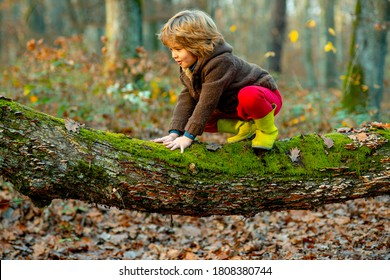Little boy kid on a tree branch. Child climbs a tree