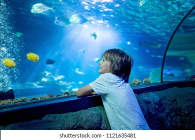 Little boy, kid watching the shoal of fish swimming in oceanarium, children enjoying underwater life in Aquarium