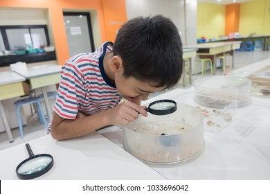Little boy learning about insect science class