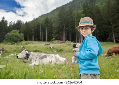 the little boy looks at cow on a green meadow