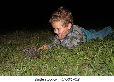 A little boy, lying on the grass, touches the hedgehog