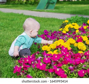 Little boy near beautiful flowers