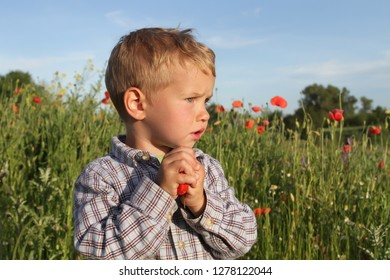 The little boy on the poppy field looks anxiously into the distance.