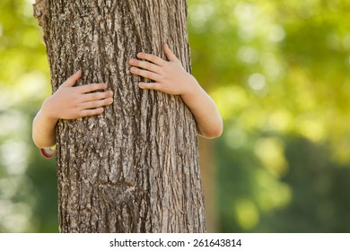 Little boy in the park hugging tree on a sunny day