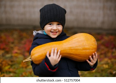Little boy picking pumpkins. Child playing in field of squash. Kids pick ripe vegetables on a farm in Thanksgiving holiday season. Family with children having fun in autumn