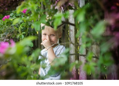 The little boy is playing hide and seek, he is hidden behind a bush of roses, by the fence, he is wonder when will be find by someone