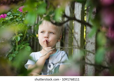 The little boy is playing hide and seek, he is hidden behind a bush of roses, by the fence, he is wondering about something