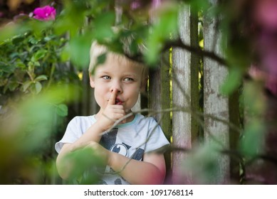The little boy is playing hide and seek, he is hidden behind a bush of roses, by the fence, he shows to be quiet.