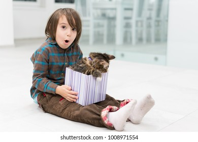 Little boy playing with his cat in little gift box