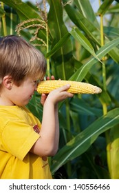 Little boy playing with sweet corn in the cornfield