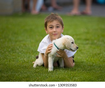 Little boy plays with puppy golden retriever in grass covered field.